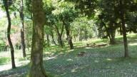20140510樹