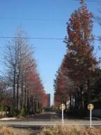 2014年11月グリーンパーク並木IMG_1410