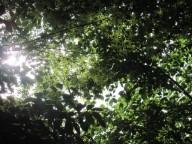 2015年5月野田山1IMG_1802